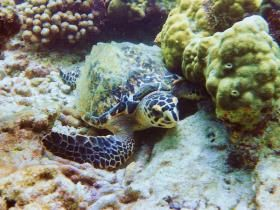 diving_martinique_001