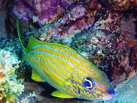 diving_martinique_007