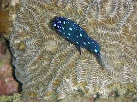 diving_martinique_008