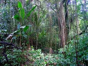 trekking_north_martinique_003