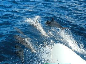 dolphins_martinique