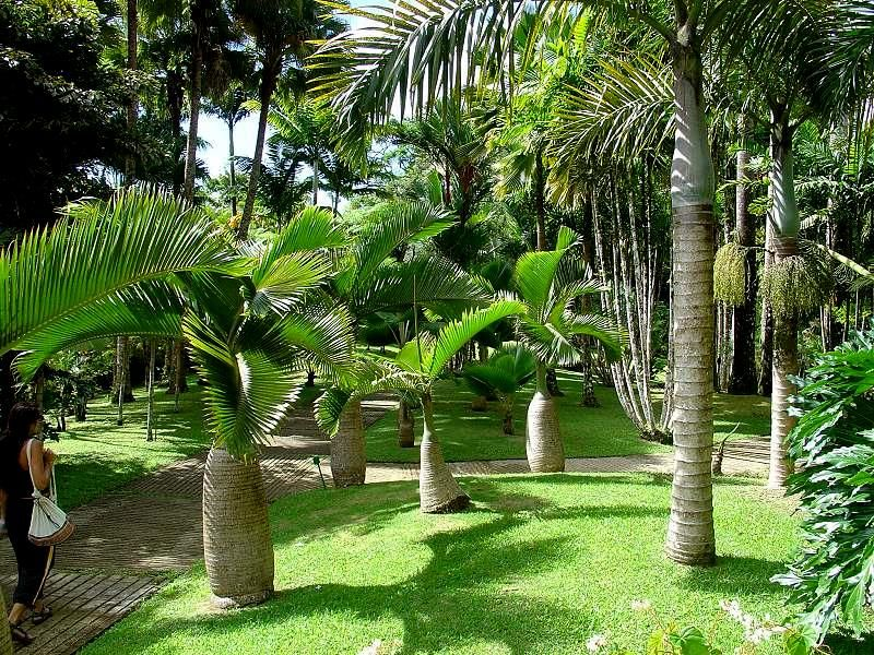 Itineraries in martinique la route de la trace for Jardin balata
