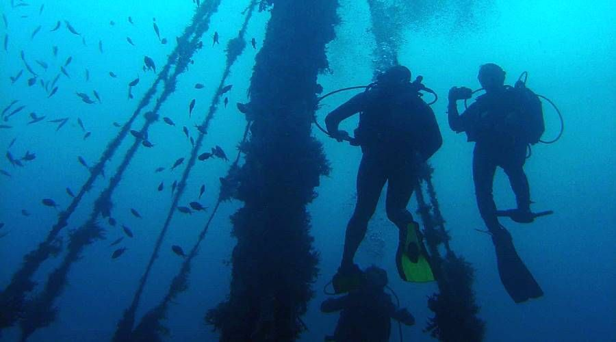 diving in the caribbean sea of martinique