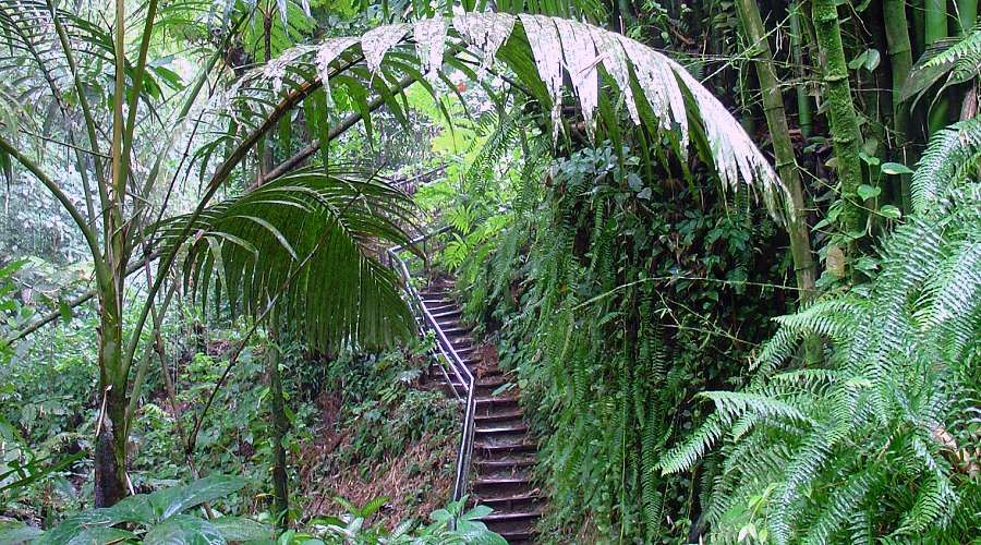 excursions and hiking in the rainforest in northern Martinique