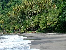 beach_anse_couleuvre_martinique